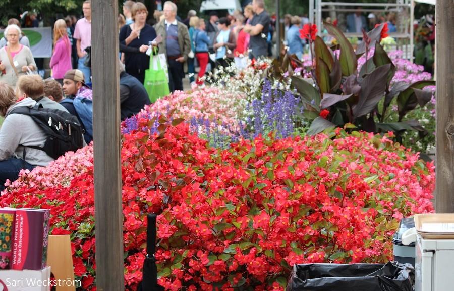 00 NEKO Lepaa 50-vuotis juhlanäyttely kukkia ja ihmisiä