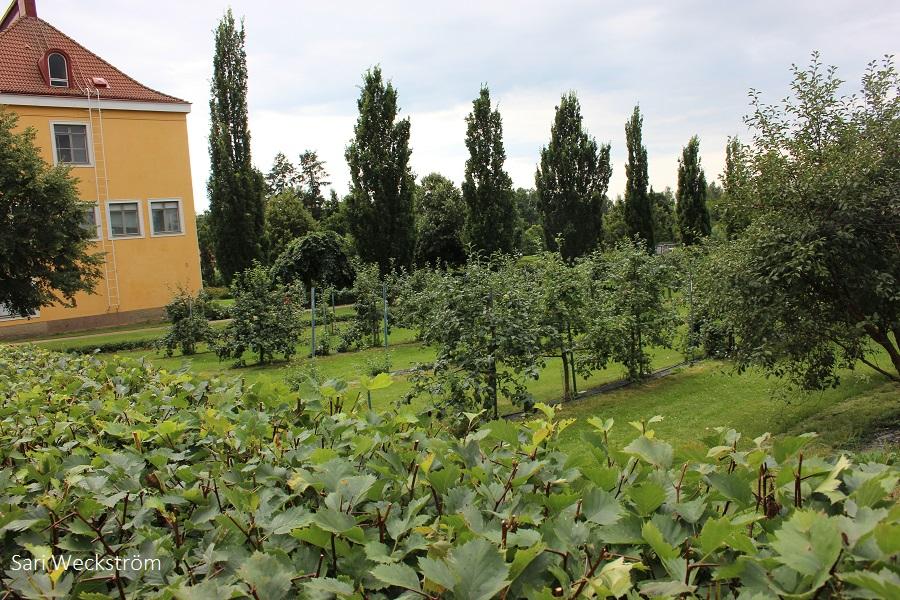 00 NEKO Lepaa 50-vuotis juhlanäyttely puutarhaoppilaitoksen vanha miljöö