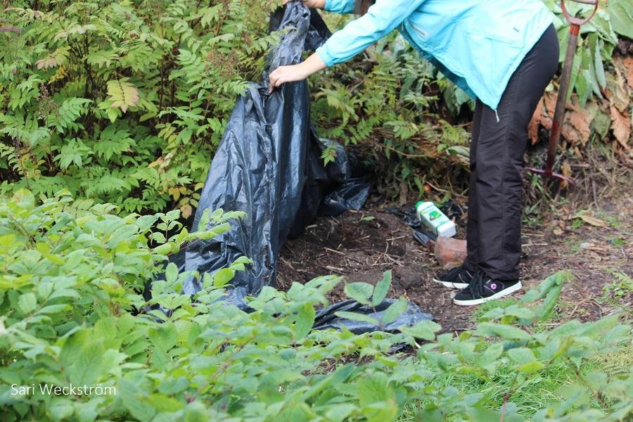 N keväällä valmista kompostimultaa syyskuussa