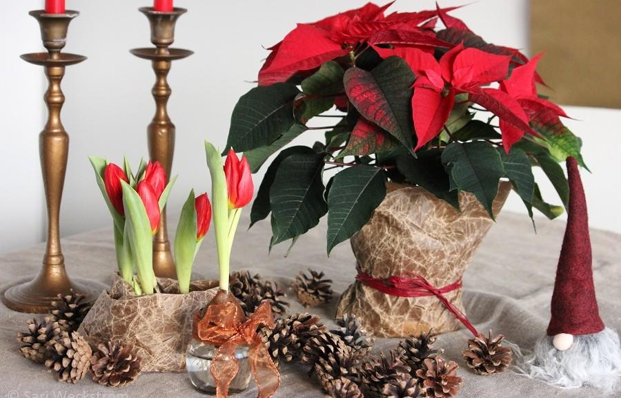 0 Neko Hyvää Joulua ja Onnellista Uutta Vuotta!