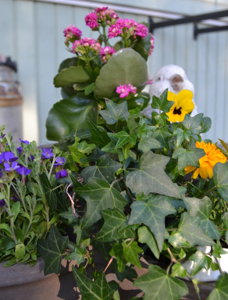 väriä kevääseen kukilla