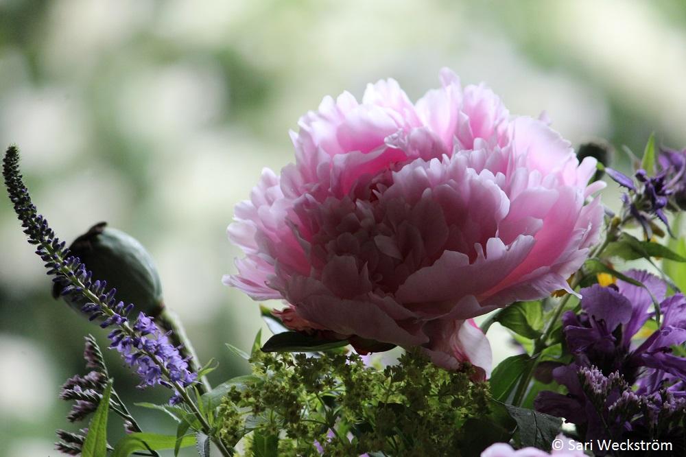 0 kukkakimppu pihan kukista, juhannusilta