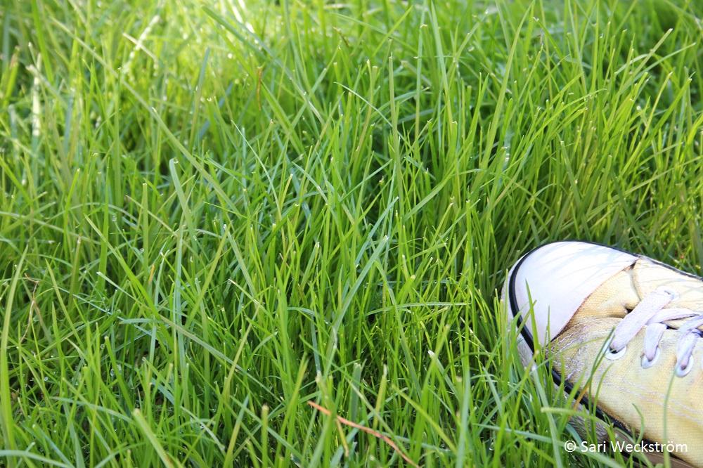 0 Neko, Merilevärouhe syyslannoitteena, nurmikon leikkaaminen