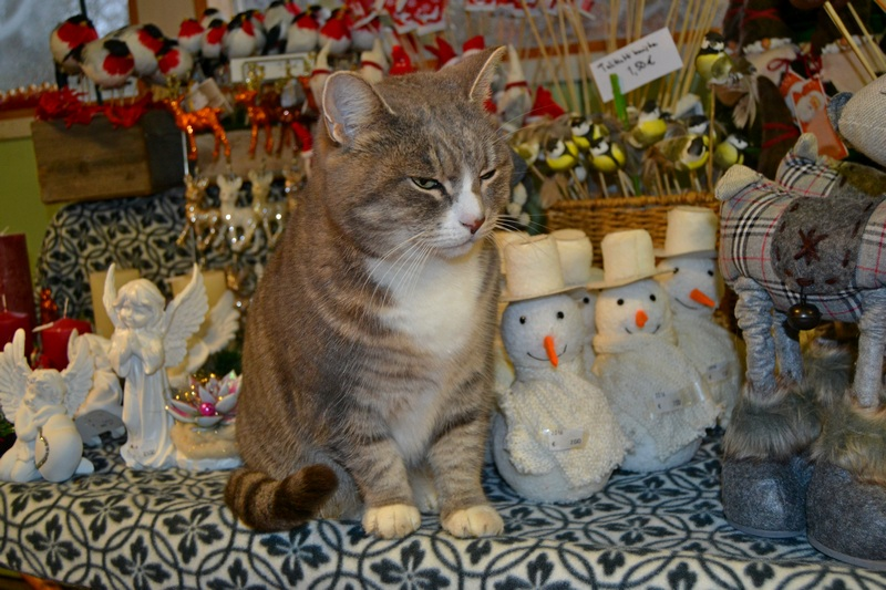 joulukoristeiden-seassa-pimu-kissa-aaltosen-puutarhalla