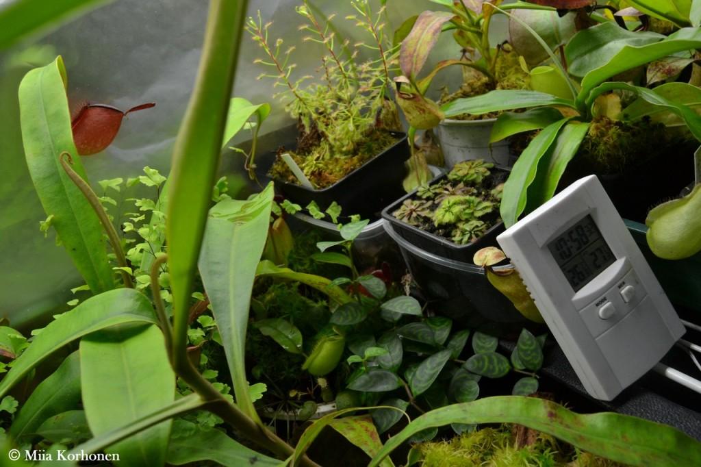 lihansyöjäkasvit tarvitsevat kosteutta ja valoa