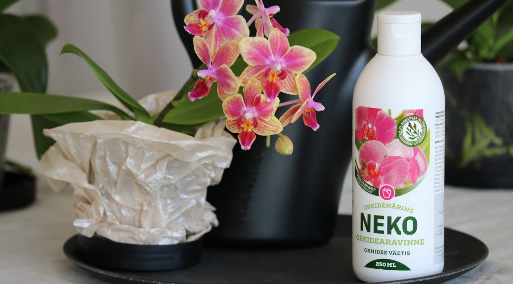 00 Perhosorkidea Philadendron Neko Orkidearavinne