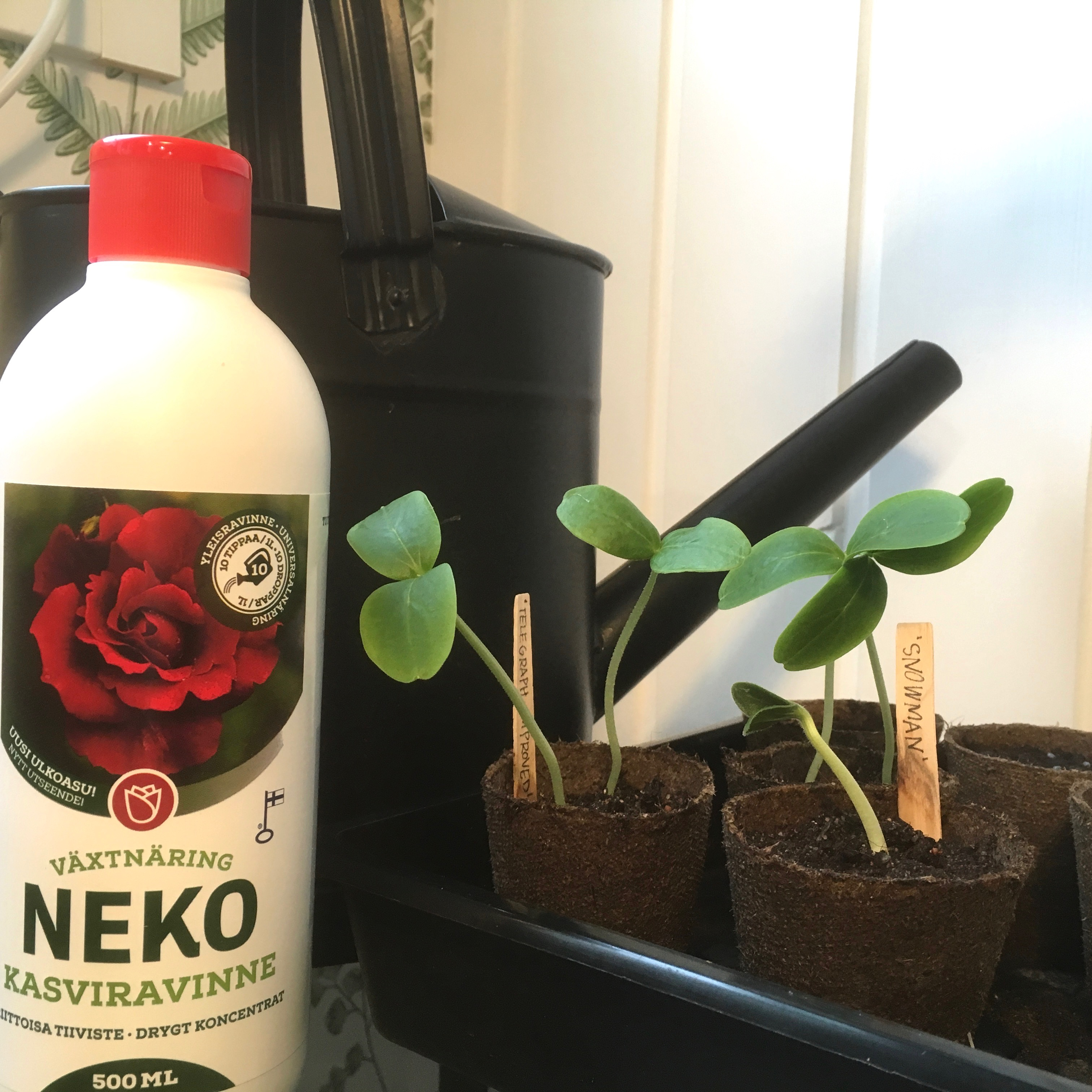 Neko kasviravinteella sopii taimikasvatuksen lannoitteeksi