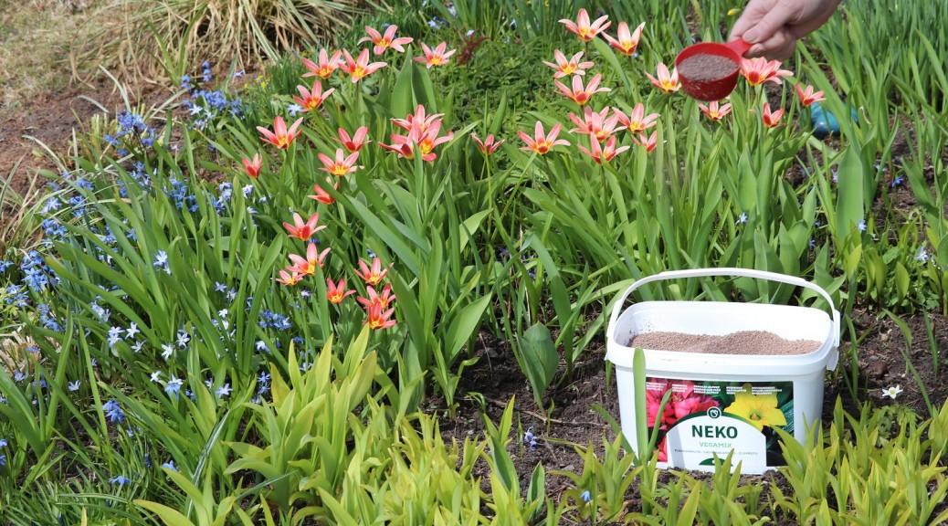 0 NEKO Vegamix keväällä kukkapenkeille ja sipulikukille