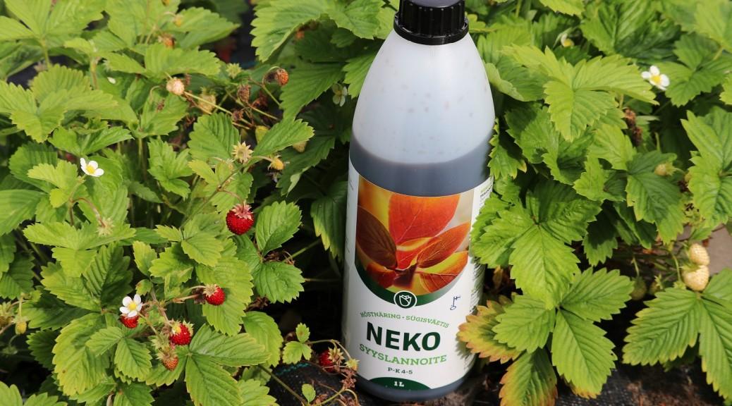 0 Neko Syyslannoite, nestemäinen kastelukannuun elokuun puolessa välissä mansikalle ja marjapensaille