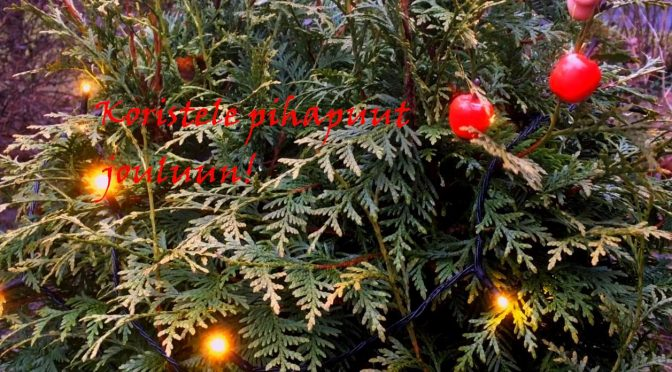 Koristele pihapuut jouluun