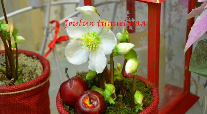 Kukkia ja joulun tunnelmaa