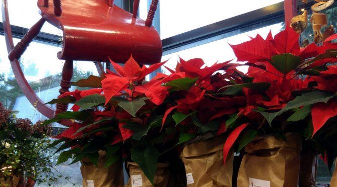 Floristiikkatalon joulu
